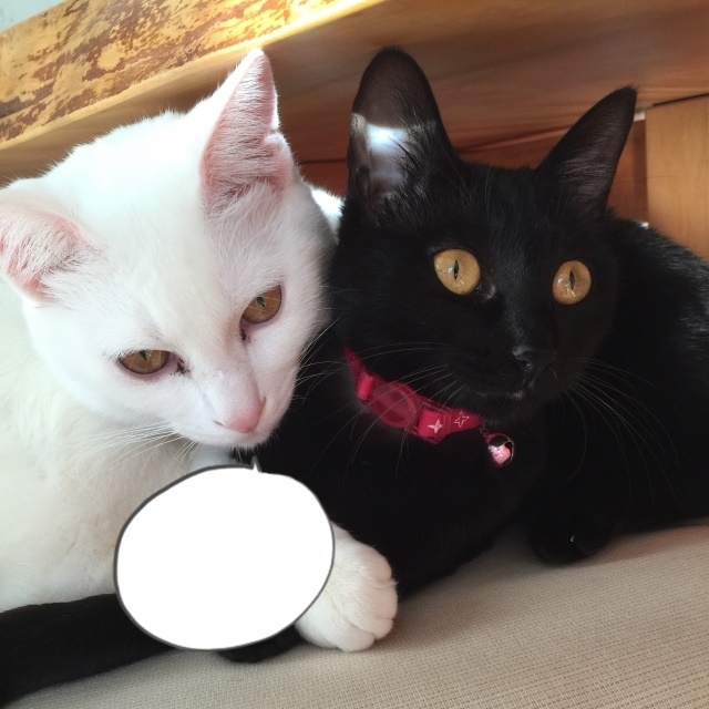 a black cat and a white cat